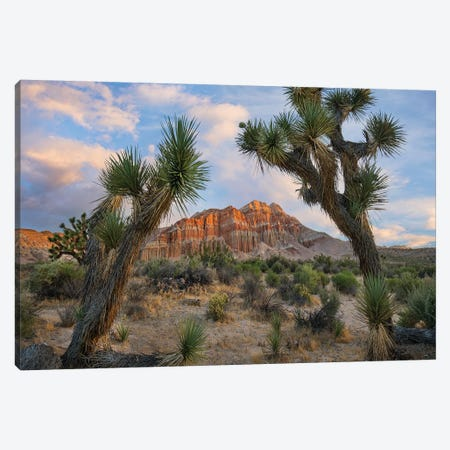 Joshua Tree And Cliffs, Red Rock Canyon State Park, California Canvas Print #TFI1342} by Tim Fitzharris Canvas Wall Art
