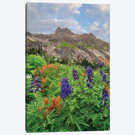 Larkspur And Paintbrush, Yankee Boy Basin, San Juan Mts, Colorado Canvas Print #TFI1348} by Tim Fitzharris Canvas Art