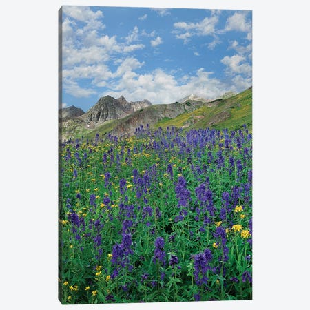 Larkspur, American Basin, San Juan Mts, Colorado Canvas Print #TFI1349} by Tim Fitzharris Canvas Art