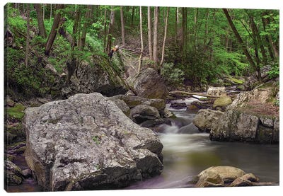 Little Stony Creek, Jefferson Nf, Virginia Canvas Art Print
