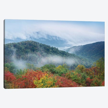 Broadleaf Forest In Fall Colors As Seen From Buck Hollow Overlook, Skyline Drive, Shenandoah National Park, Virginia Canvas Print #TFI135} by Tim Fitzharris Art Print