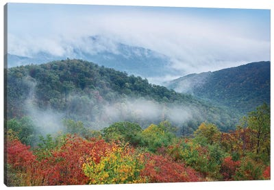 Broadleaf Forest In Fall Colors As Seen From Buck Hollow Overlook, Skyline Drive, Shenandoah National Park, Virginia Canvas Art Print