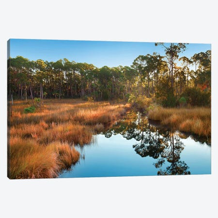Marsh And Trees At Sunrise, Saint Joseph Peninsula, Florida Canvas Print #TFI1362} by Tim Fitzharris Canvas Art