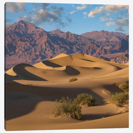 Mesquite Flat Sand Dunes, Death Valley National Park, California Canvas Print #TFI1365} by Tim Fitzharris Art Print