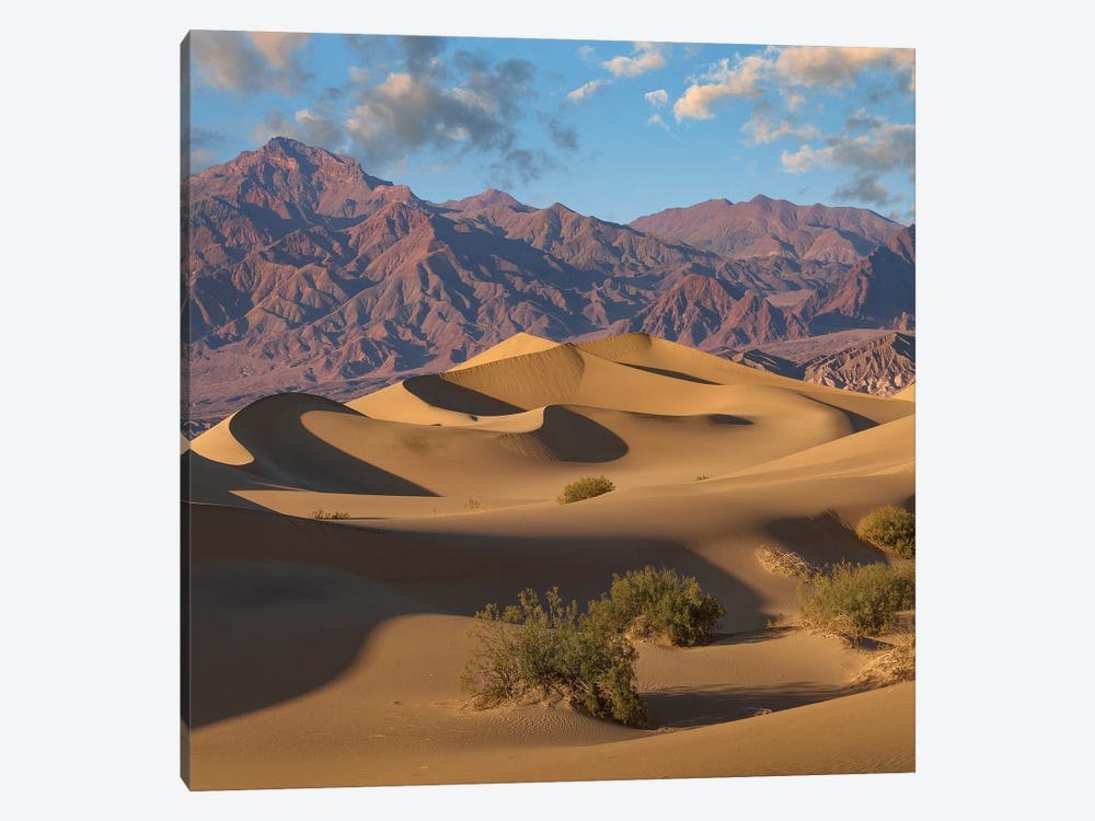 Mesquite Flat Sand Dunes, Death Valley National Park, California by Tim Fitzharris 1-piece Canvas Artwork
