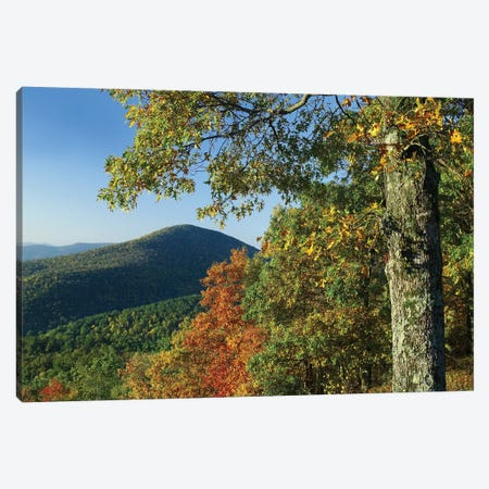 Broadleaf Forest In Fall Colors As Seen From Doyles River Overlook, Shenandoah National Park, Virginia Canvas Print #TFI136} by Tim Fitzharris Canvas Art Print
