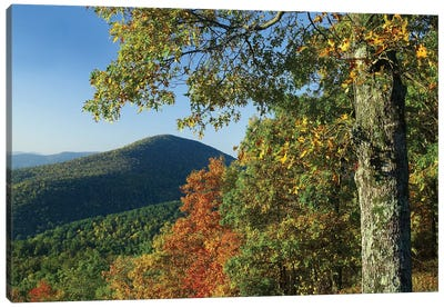 Broadleaf Forest In Fall Colors As Seen From Doyles River Overlook, Shenandoah National Park, Virginia Canvas Art Print