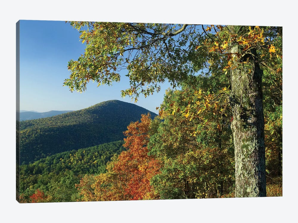 Broadleaf Forest In Fall Colors As Seen From Doyles River Overlook, Shenandoah National Park, Virginia 1-piece Canvas Artwork