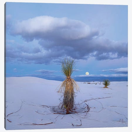 Moon And Soaptree Yucca, White Sands Nm, New Mexico Canvas Print #TFI1374} by Tim Fitzharris Canvas Artwork