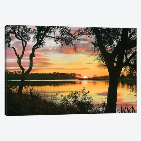 Oaks At Sunrise, Ochlockonee River, Ochlockonee River State Park, Florida Canvas Print #TFI1388} by Tim Fitzharris Canvas Artwork