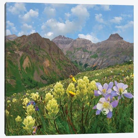 Paintbrush And Columbine, Governor Basin, Colorado Canvas Print #TFI1389} by Tim Fitzharris Canvas Art