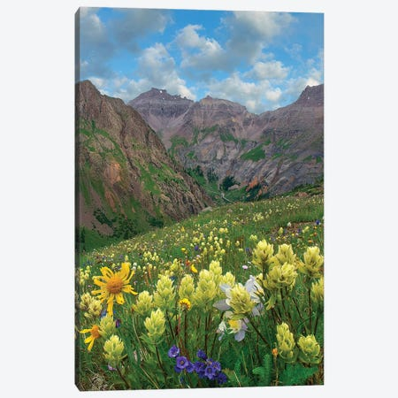 Paintbrush, Governor Basin, Colorado Canvas Print #TFI1390} by Tim Fitzharris Art Print