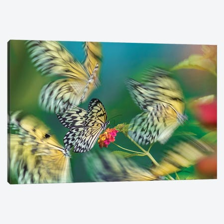 Paper Kite Butterflies Flying, Philippines Canvas Print #TFI1391} by Tim Fitzharris Canvas Print