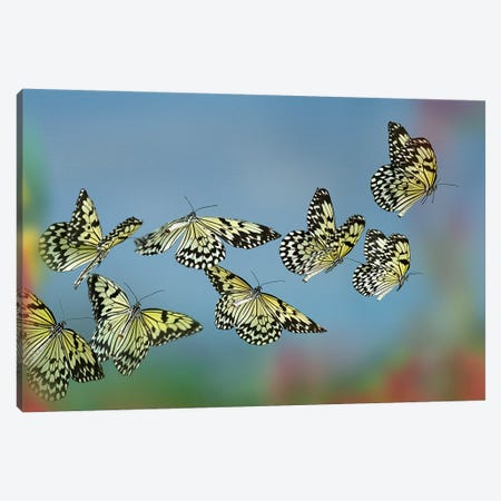 Paper Kite Butterflies Flying, Philippines Canvas Print #TFI1392} by Tim Fitzharris Canvas Print