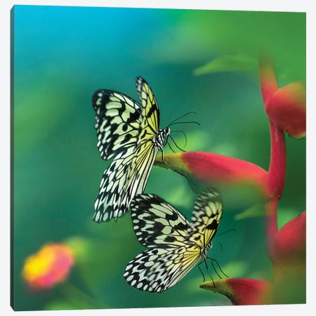 Paper Kite Butterflies Flying, Philippines Canvas Print #TFI1393} by Tim Fitzharris Canvas Print