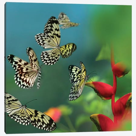 Paper Kite Butterflies Flying, Philippines Canvas Print #TFI1394} by Tim Fitzharris Canvas Artwork