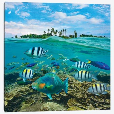 Parrotfish, Wrasse, And Sergeant Major Damselfish, Balicasag Island, Philippines Canvas Print #TFI1398} by Tim Fitzharris Canvas Art Print