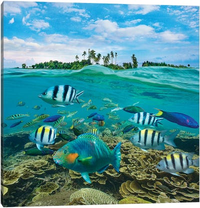 Parrotfish, Wrasse, And Sergeant Major Damselfish, Balicasag Island, Philippines Canvas Art Print