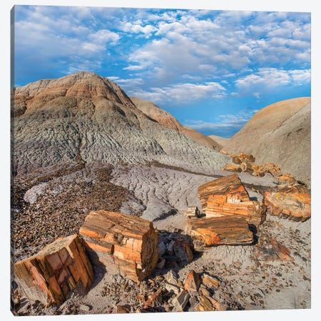 Petrified Logs, Blue Mesa, Petrified Forest National Park, Arizona Canvas Print #TFI1401} by Tim Fitzharris Art Print