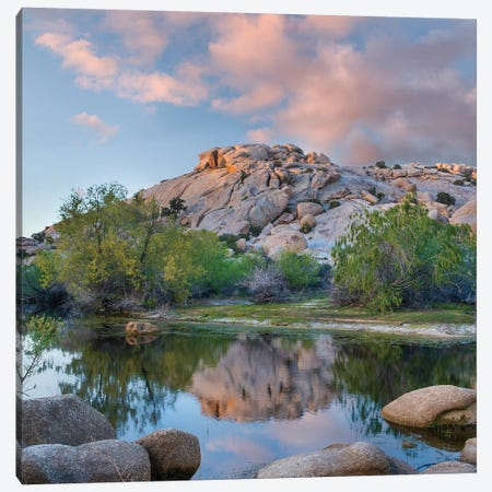 Pond, Barker Pond Trail, Joshua Tree National Park, California Canvas Print #TFI1407} by Tim Fitzharris Canvas Art