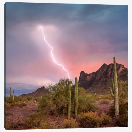 Saguaro (Carnegiea Gigantea) Cacti With Lightning Over Peak In Desert, Picacho Peak State Park, Arizona Canvas Print #TFI1424} by Tim Fitzharris Canvas Art