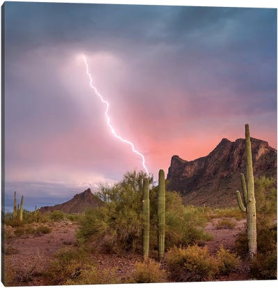 Saguaro (Carnegiea Gigantea) Cacti With Lightning Over Peak In Desert, Picacho Peak State Park, Arizona Canvas Art Print