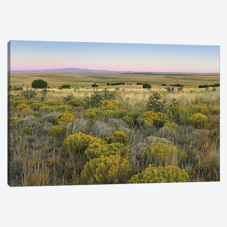 Broomweed Growing Among Prairie Grasses, Apishapa State Wildlife Refuge, Colorado Canvas Print #TFI142} by Tim Fitzharris Canvas Art Print
