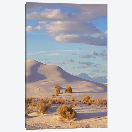 Sand Dune, White Sands Nm, New Mexico Canvas Print #TFI1433} by Tim Fitzharris Canvas Art