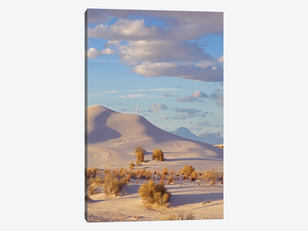 Sand Dune, White Sands Nm, New Mexico by Tim Fitzharris 1-piece Canvas Artwork