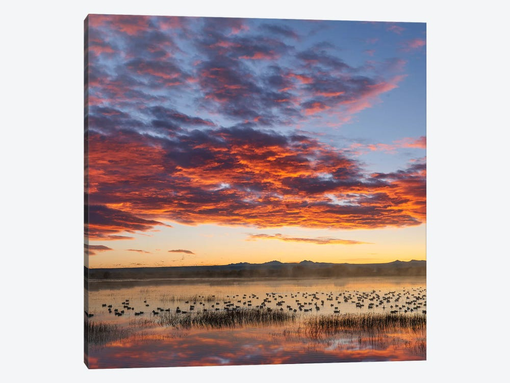 Snow Geese At Sunrise, Bosque Del Apache Nwr, New Mexico by Tim Fitzharris 1-piece Art Print