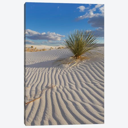 Soaptree Yucca, White Sands Nm, New Mexico Canvas Print #TFI1448} by Tim Fitzharris Canvas Print