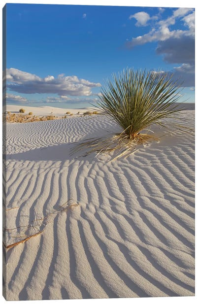 Soaptree Yucca, White Sands Nm, New Mexico Canvas Art Print