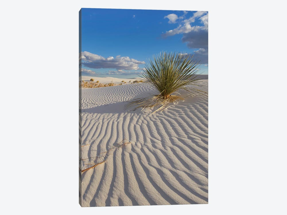 Soaptree Yucca, White Sands Nm, New Mexico by Tim Fitzharris 1-piece Canvas Wall Art