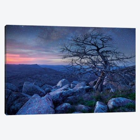Stars Over Pine On Mount Scott, Wichita Mountains Nwr, Oklahoma Canvas Print #TFI1451} by Tim Fitzharris Canvas Wall Art
