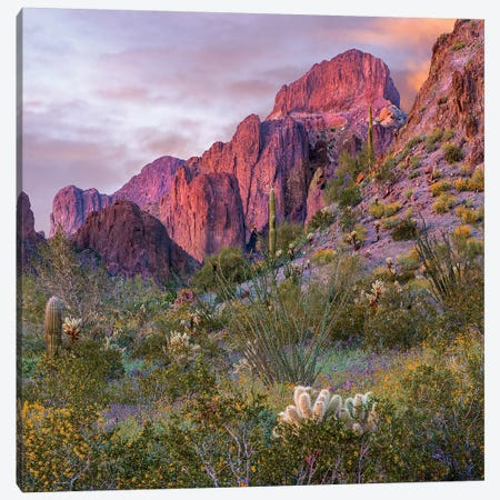 Teddy Bear Cholla And Saguaro, Kofa Nwr, Arizona Canvas Print #TFI1459} by Tim Fitzharris Canvas Artwork