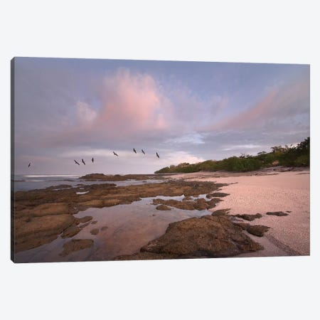 Brown Pelican Group Flying Over Playa Langosta, Guanacaste, Costa Rica Canvas Print #TFI145} by Tim Fitzharris Canvas Wall Art
