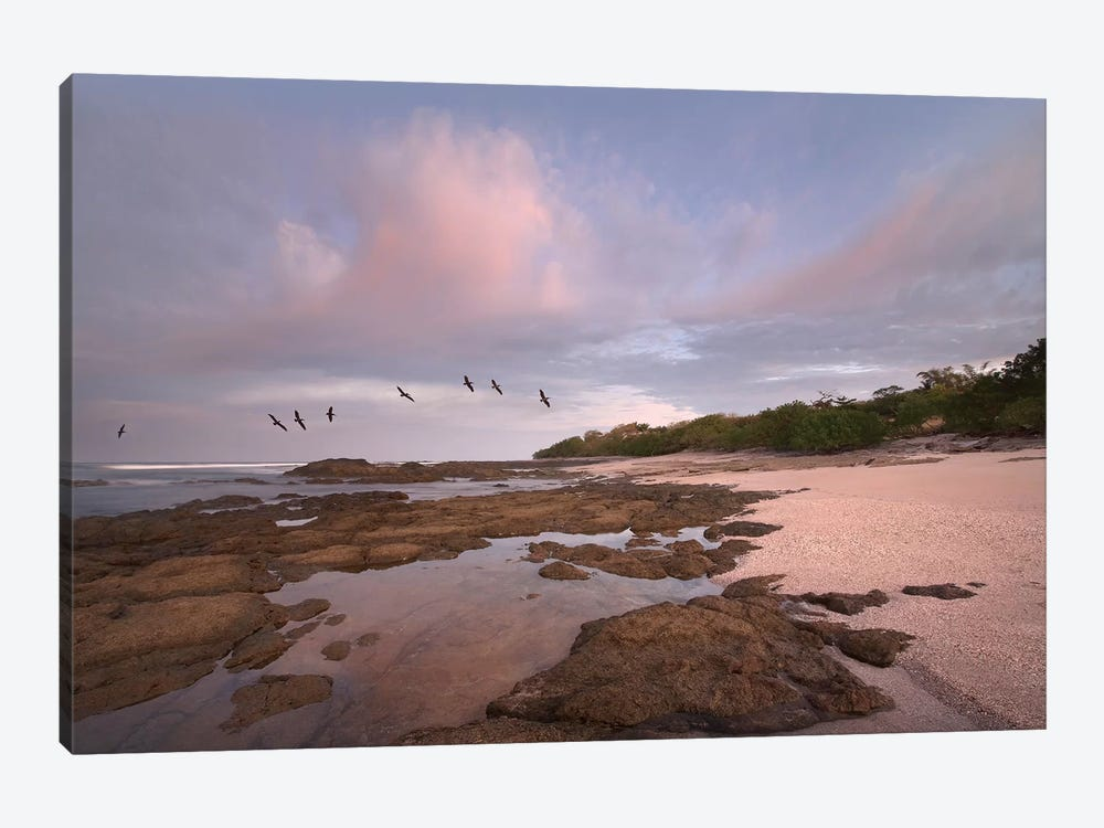 Brown Pelican Group Flying Over Playa Langosta, Guanacaste, Costa Rica by Tim Fitzharris 1-piece Canvas Wall Art