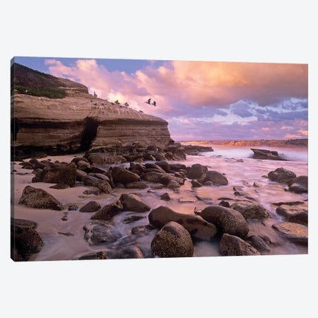 Brown Pelican Pair Landing On Coastal Rocks, La Jolla, California Canvas Print #TFI146} by Tim Fitzharris Canvas Art