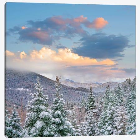 Winter Coniferous Forest, Aspen Vista, Santa Fe National Forest, New Mexico 3-Piece Canvas #TFI1488} by Tim Fitzharris Canvas Art Print