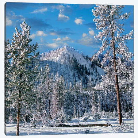 Winter In Yellowstone National Park, Wyoming Canvas Print #TFI1489} by Tim Fitzharris Canvas Art Print