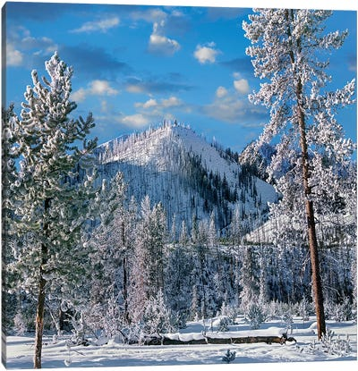 Winter In Yellowstone National Park, Wyoming Canvas Art Print