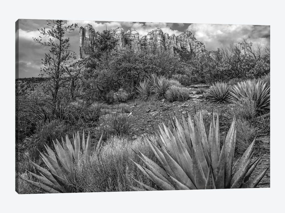 Agave, Coffee Pot Rock near Sedona, Arizona by Tim Fitzharris 1-piece Canvas Artwork