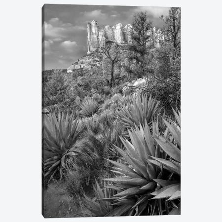 Agave, Coffee Pot Rock near Sedona, Arizona Canvas Print #TFI1498} by Tim Fitzharris Canvas Artwork