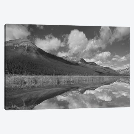 Beauty Creek, Winston Churchill Range, Jasper National Park, Alberta, Canada Canvas Print #TFI1522} by Tim Fitzharris Canvas Art