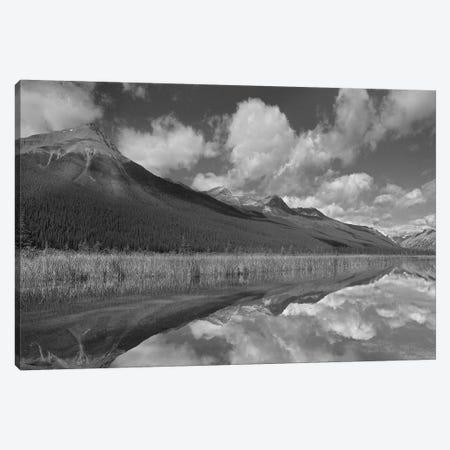 Beauty Creek, Winston Churchill Range, Jasper National Park, Alberta, Canada Canvas Print #TFI1522} by Tim Fitzharris Canvas Art