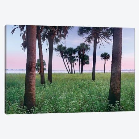 Cabbage Palm Meadow, Myakka River State Park, Florida Canvas Print #TFI155} by Tim Fitzharris Canvas Print