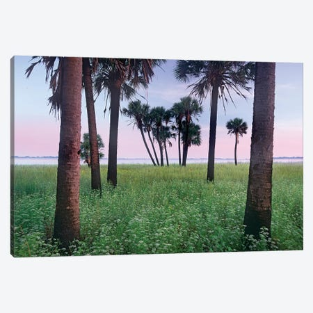 Cabbage Palm Meadow, Myakka River State Park, Florida Canvas Print #TFI155} by Tim Fitzharris Canvas Print