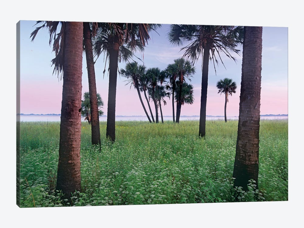 Cabbage Palm Meadow, Myakka River State Park, Florida by Tim Fitzharris 1-piece Art Print