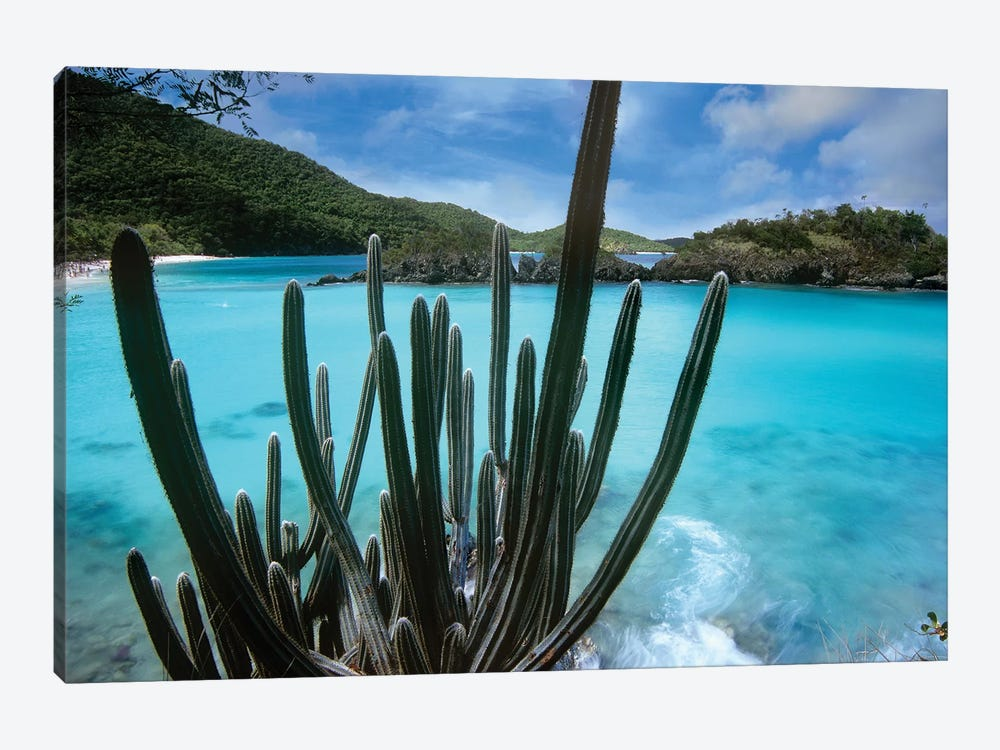 Cactus Growing Along Trunk Bay, Virgin Islands National Park, Virgin Islands by Tim Fitzharris 1-piece Canvas Wall Art