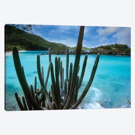 Cactus Growing Along Trunk Bay, Virgin Islands National Park, Virgin Islands Canvas Print #TFI156} by Tim Fitzharris Art Print